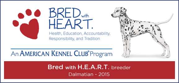 Bred with Heart Dalmatians